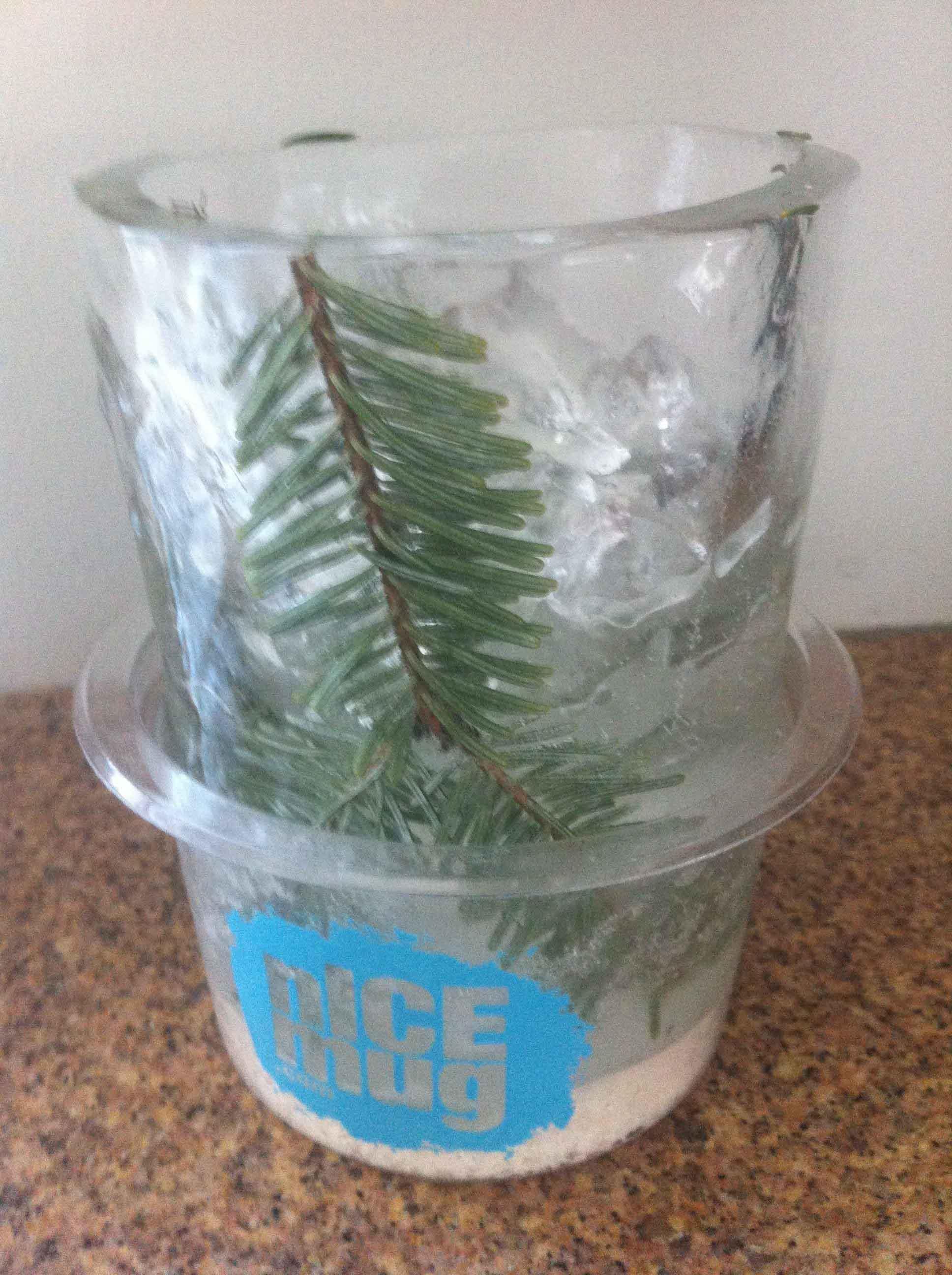 pine clipping nICE mug