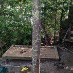 woodshed trees